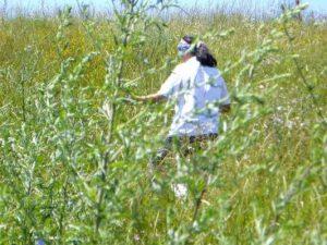 culturi-bio-flora-spontana