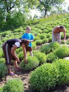 culturi-bio-munca