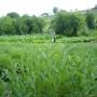 culturi-bio-salvie-3