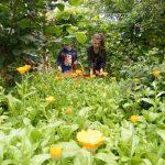 galbenele-culturi-ecologice