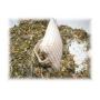 pernuta-dus-anticelulita-plante2