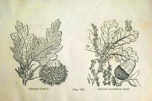 planse carte Cultura si recolta plantelor farmaceutice - Dr. Gh. P. Grintescu