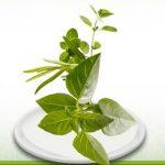 produse-vegetale
