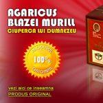 agaricus-blazei-ciuperca-lui-dumnezeu