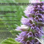 Fitoterapia-o-medicina-care-iubeste-omul-PREZENTARE-pag22
