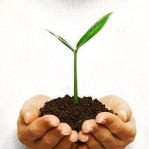 ingrasaminte naturale pentru cultivarea plantelor medicinale