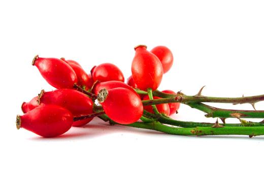 Rosa Canina-macesul-vitaminizant puternic
