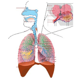 Suplimente nutritive - Aparat respirator