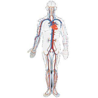 Suplimente nutritive - Sitem cardiovascular