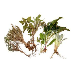 Butasi ecologici Farmacia Naturii